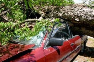 Car Tree Insurance Claim